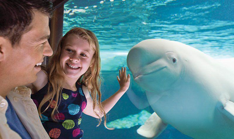 2020 Fun Card Discount SALE at SeaWorld and Busch Gardens