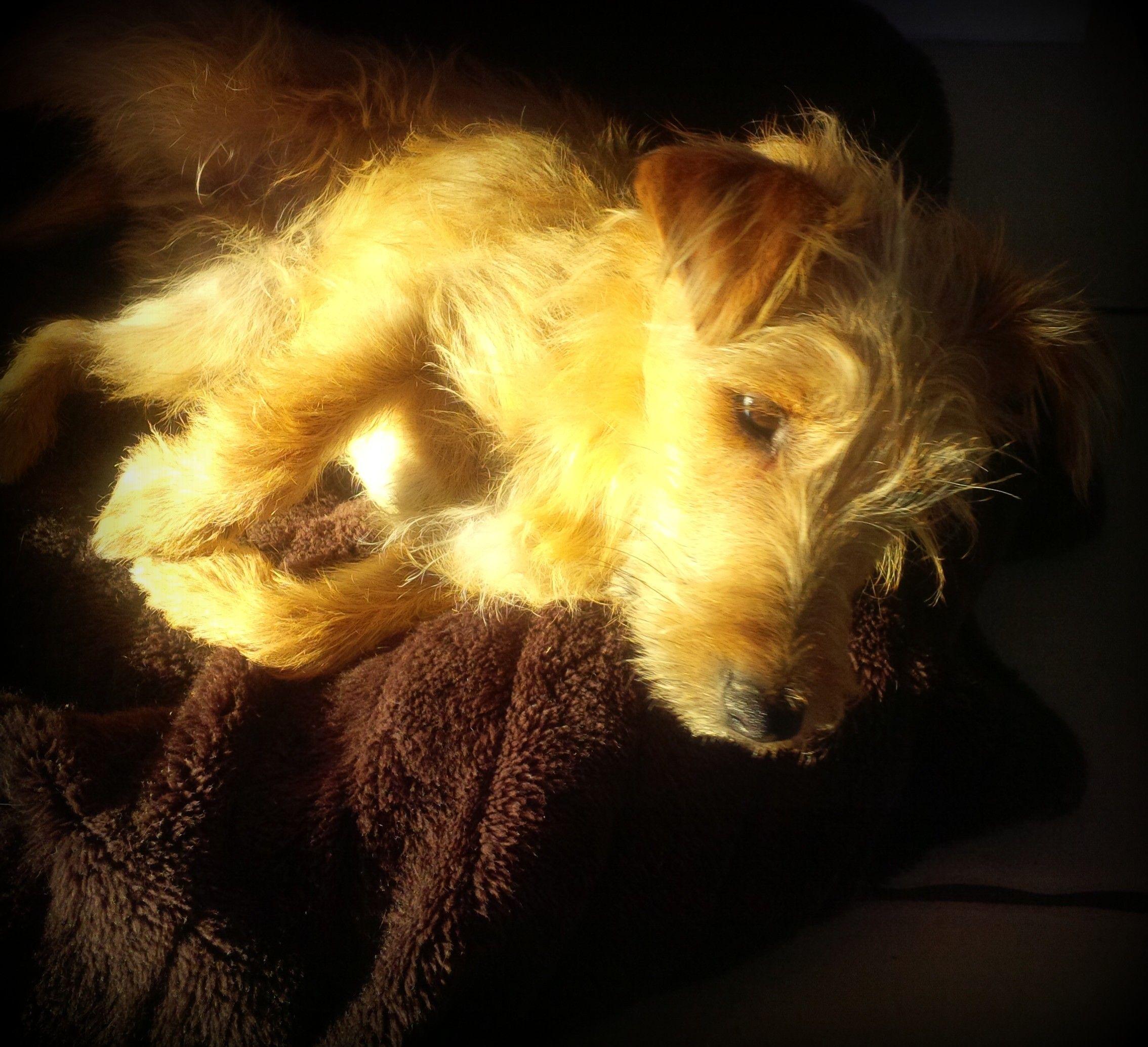 Dog in the sunshine - My sunshine boy!
