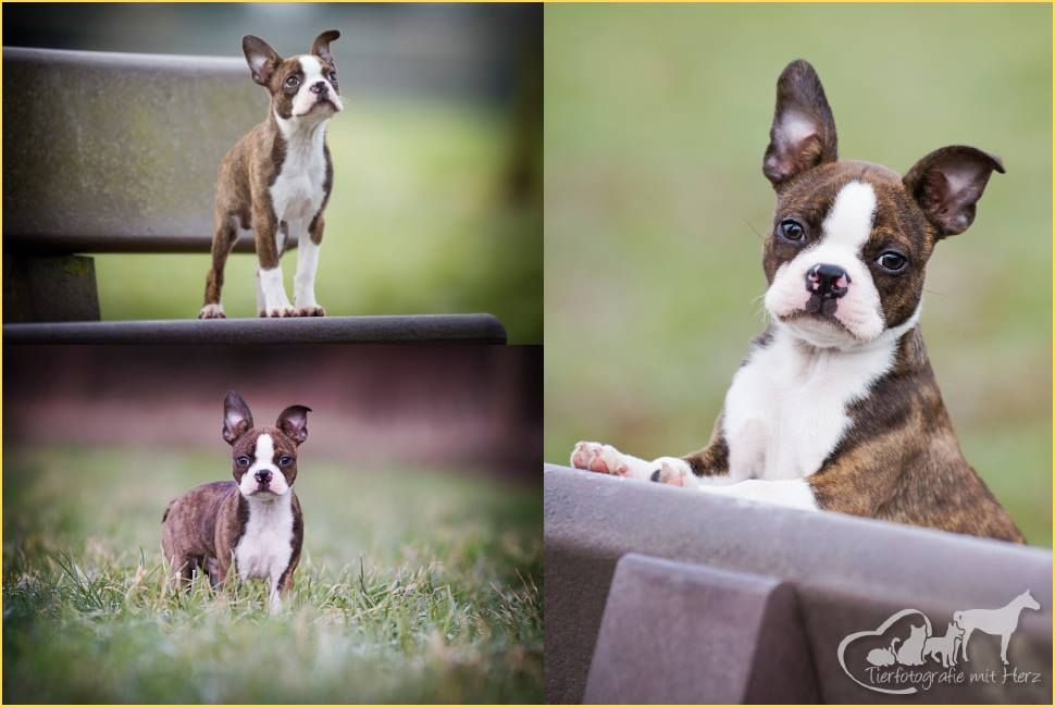 Fotoshooting mit Nicole http://www.tierfotografie-mit-herz.de  Und der Schnuckel ist mein kleiner Fratz gerade 3 Monate Alt