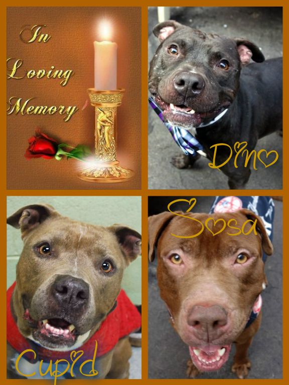 If There Ever Comes A Day When We Can´t Be Together, Keep Me In Your Heart, I´ll Stay There Forever  **Sosa - Cupid - Dino all killed 1-11-2016 by NYCACC** R.I.P.  A1062387 - A1062256 - A1062143