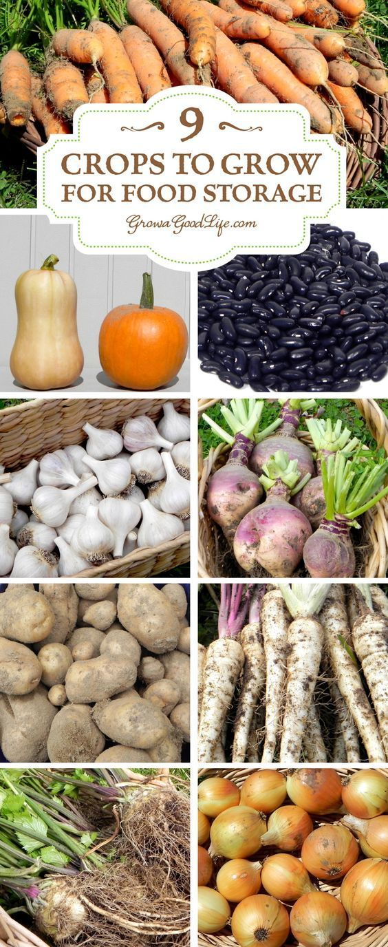 9 Crops to Grow for Food Storage Vegetable storage