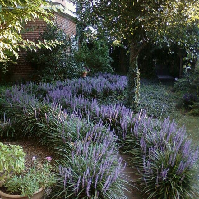Liz's garden :)