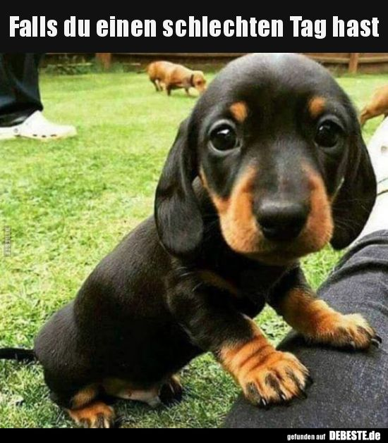 Photo of Best pictures, videos and sayings and there are new funny Facebook every day …