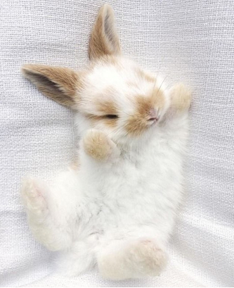 Learn About Pet Rabbit - Page 7 of 28 | Cute baby bunnies, Cute little animals, Cute baby animals