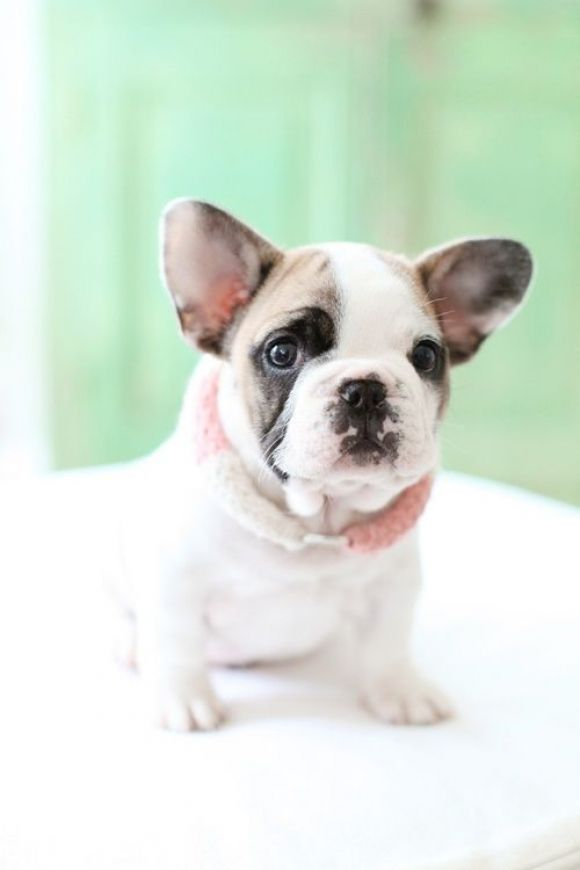 Adorable cute little puppy... to see more click on pic