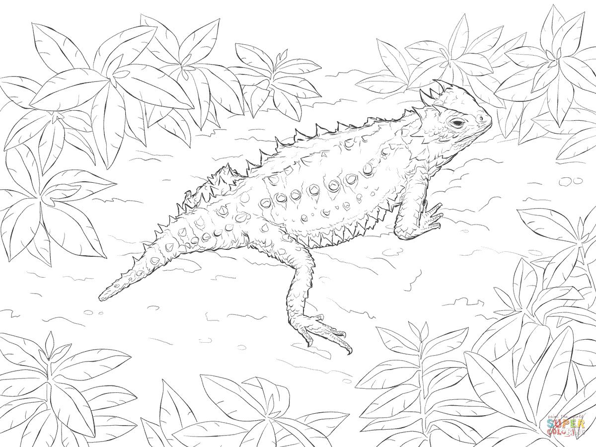 Desert Horned Lizard Super Coloring in 2019 Horned