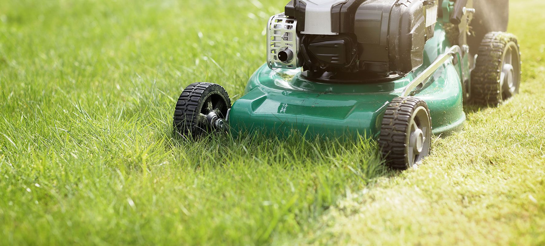 Build Your Dream Yard In Aurora (With images) Lawn care