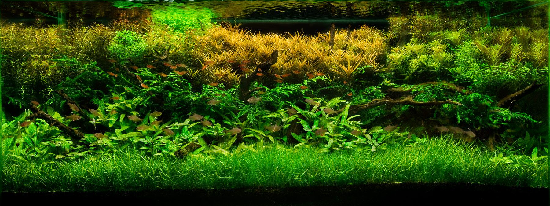 Fish aquarium with plants - Aquarium Design Group A Layout With Lush Stemmed Aquatic Plants