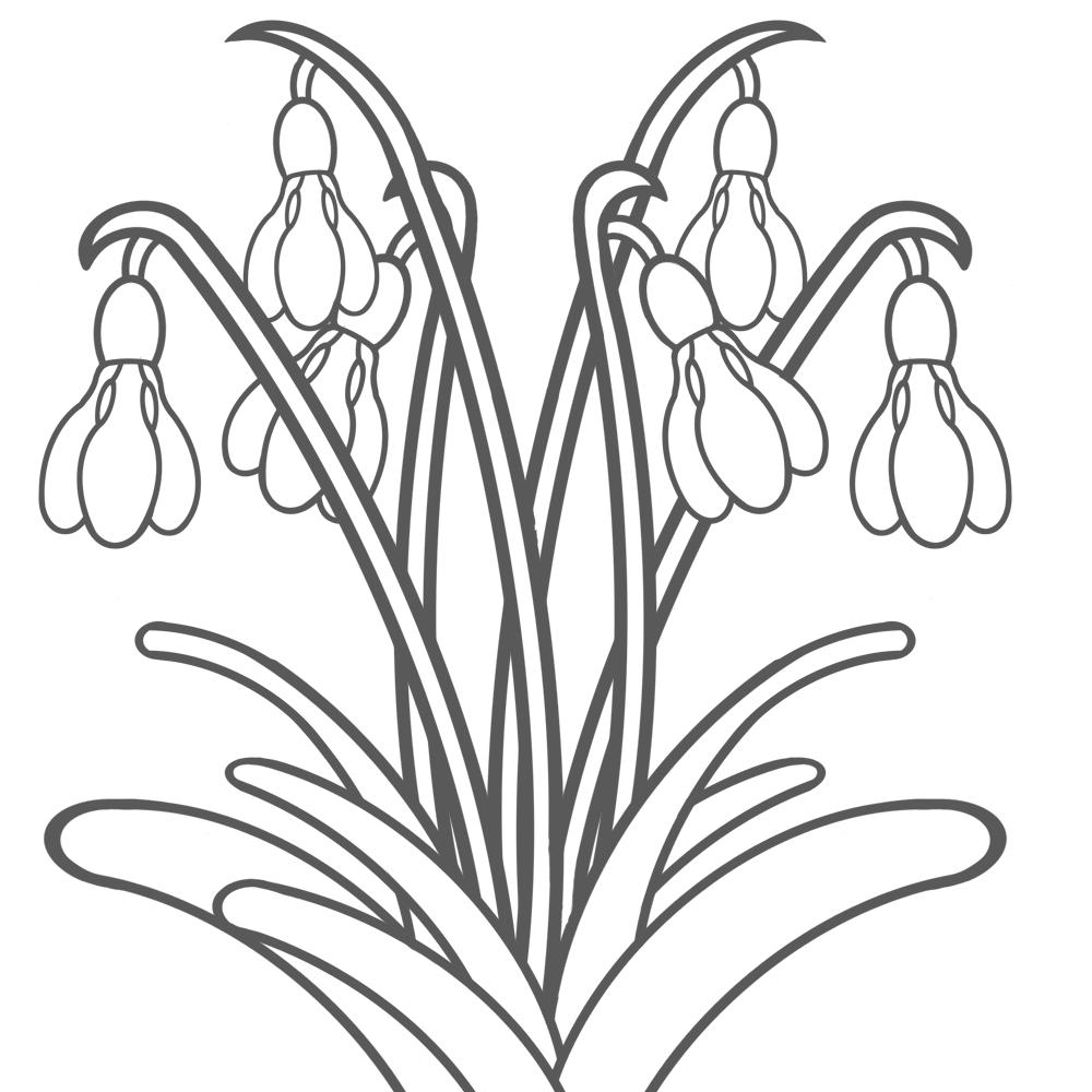 Bildergebnis Für Malvorlagen Frühblüher Kostenlos Bleistiftmalen1