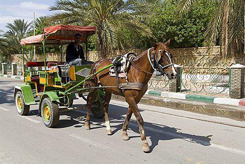 Coche de caballos, Tozeur, Túnez, África del Norte, África