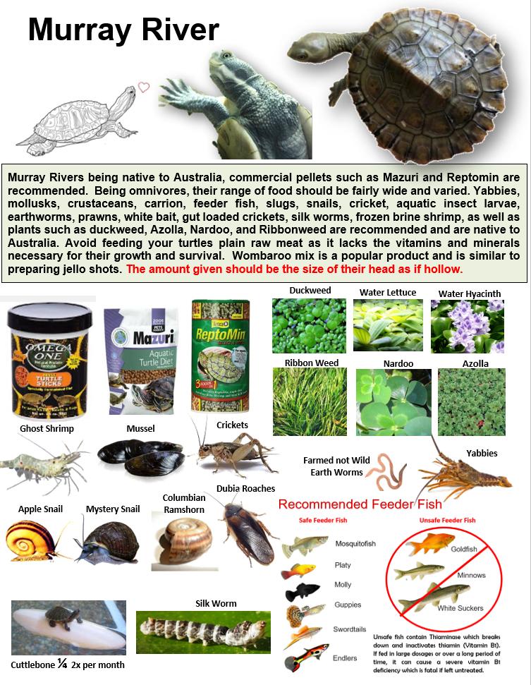 Pin On Aquatic Turtle Educational Posters Created By Lisa Yakir