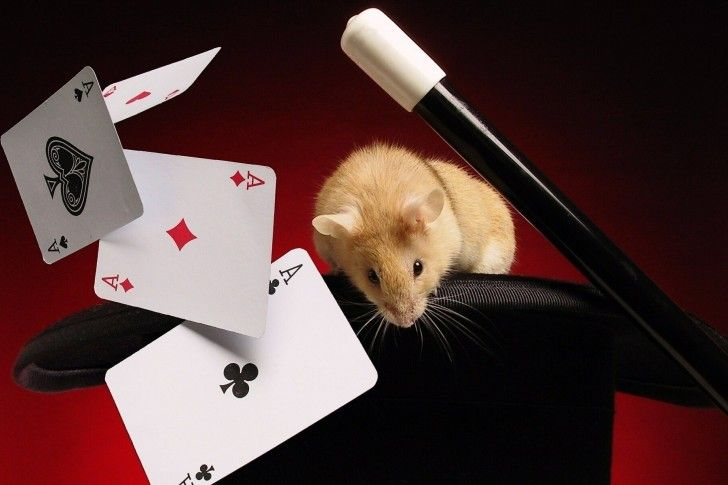 Poker  #cartes #cards #jetons #casino #roi #as #jeux #game