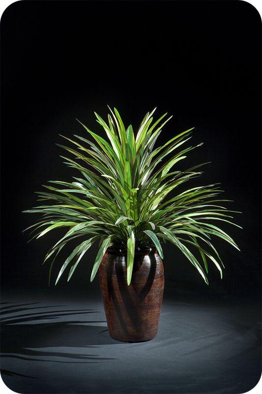 21 inch Yucca Head - $67.00 (Item R041)