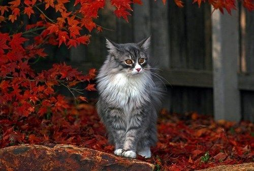 Autumn Cat. This it's a beautiful cat with a beautiful background.