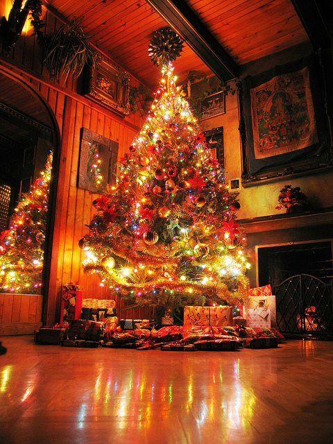 Pin by Angel Beard on Christmas Trees Pinterest Christmas tree