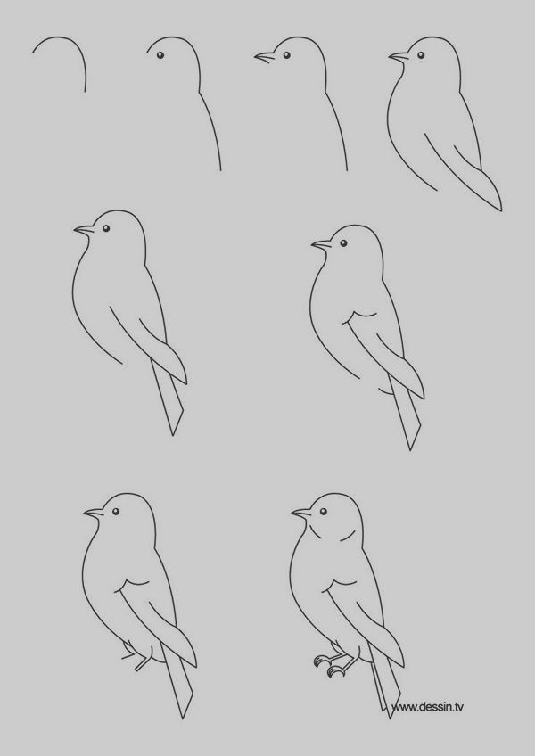 40 Easy Step By Step Art Drawings To Practice | Bird ...