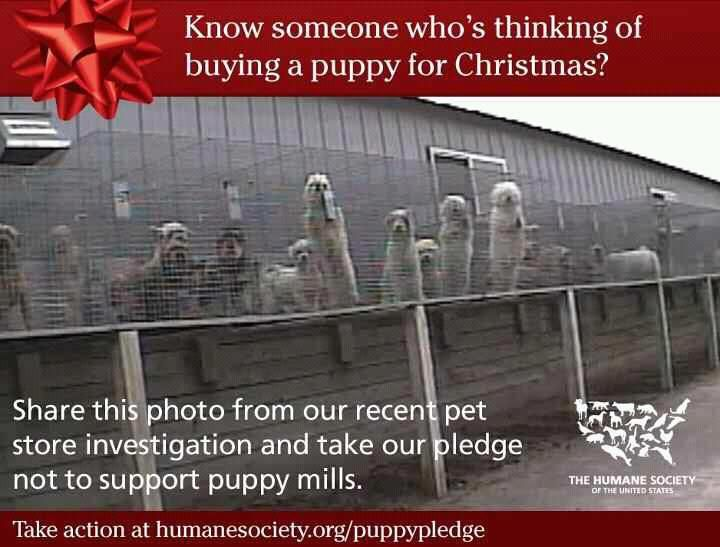 Never buy a puppy from a pet store. You are supporting