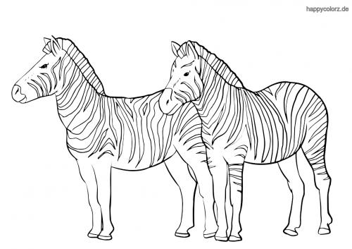 Zebra-Paar Malvorlage Zootiere Kleine schildkröten Tiere