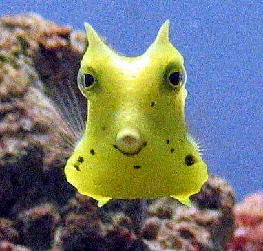 深海 魚 ブサイク