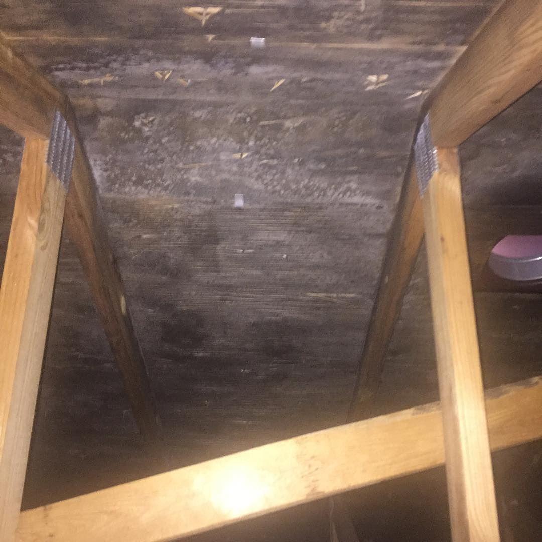 Black Mold Attic Removal Buffalo Ny Buffalony Gobills Moldremoval Mold Moldtesting Moldremediation Blac Mold Remover Construction Group Mold Remediation