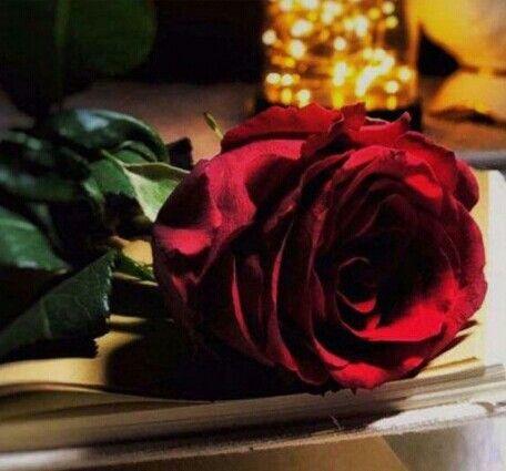 البسمه اللي ترحب بي وانا مقبل يا جعلني ما خلا من وجه راعيها Flowers Rose Plants