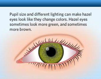 Eye color hazel true Brown Eyes