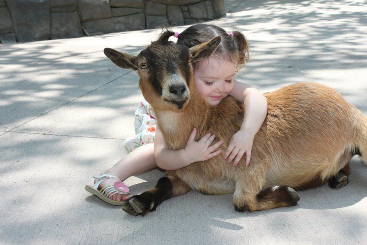 First Time Posting I Hear Y All Like Cute So Here S My Little Girl With A Goat Animals For Kids Animals Animals Friends