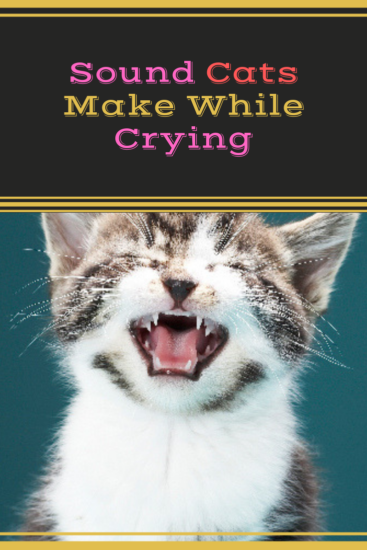 7 Common Cat Noises And What They Mean Cats, Cat noises