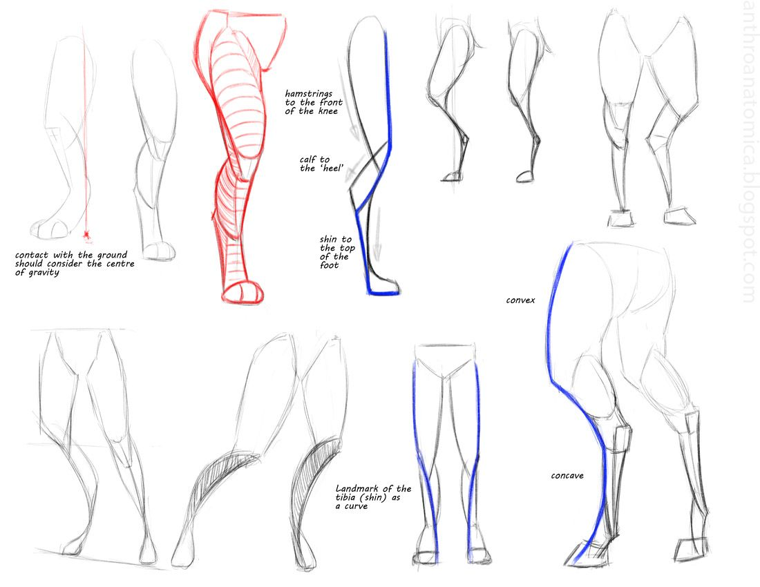 Anthro Anatomica: Anthro leg gestures | Ideas on paper | Pinterest ...