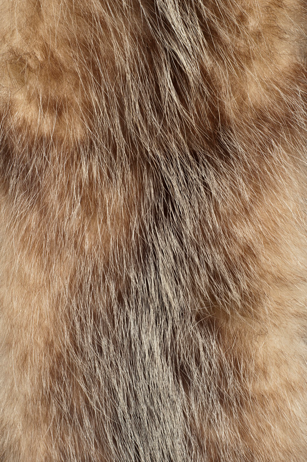 Fur Texture In 2021 Fur Textures Brown Aesthetic Texture