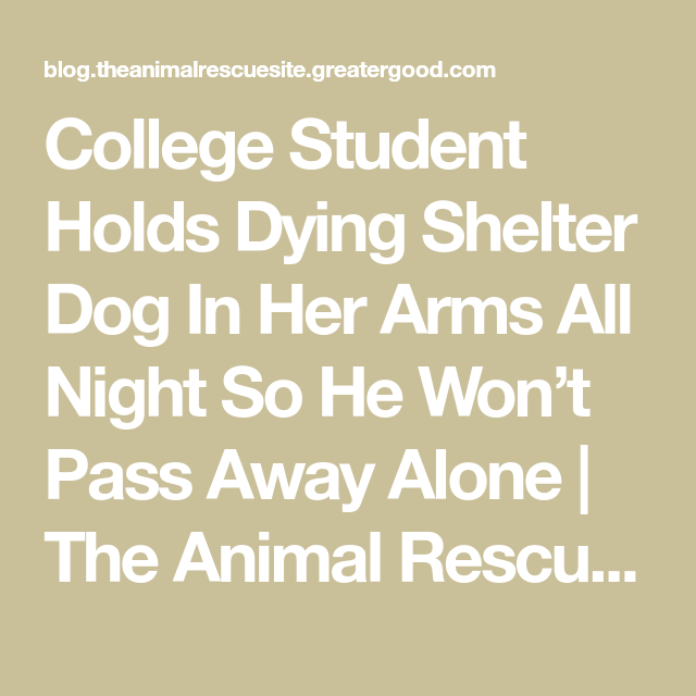 College Student Holds Dying Shelter Dog In Her Arms All Night So He Won't Pass Away Alone #animalrescue