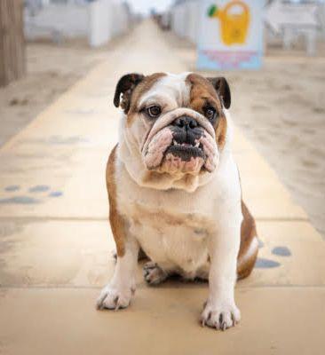 Rimini Rimini Dog No Problem Bagno 82 Spiaggia Attrezzata