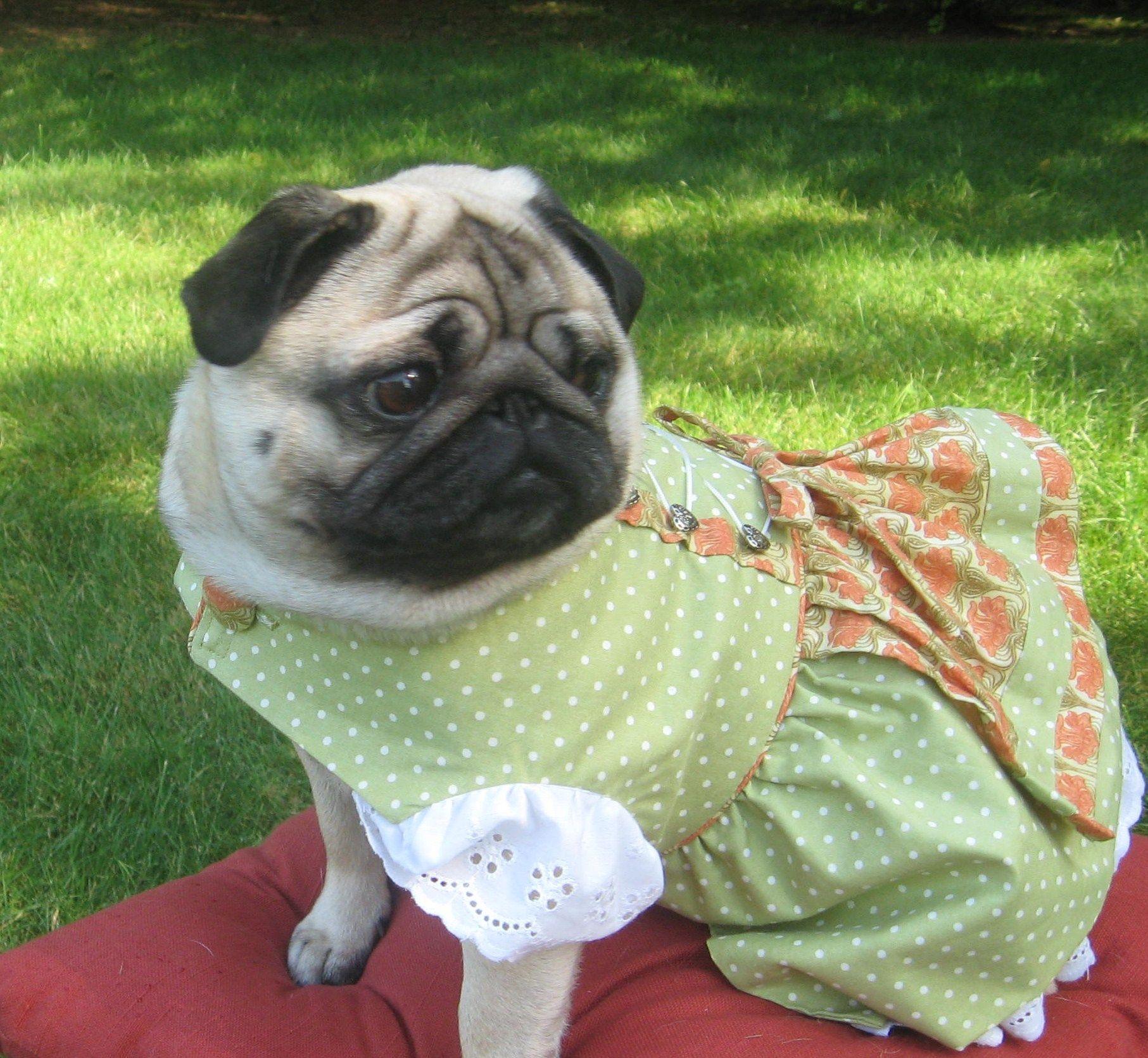 Pugtoberfest Pugs Baby