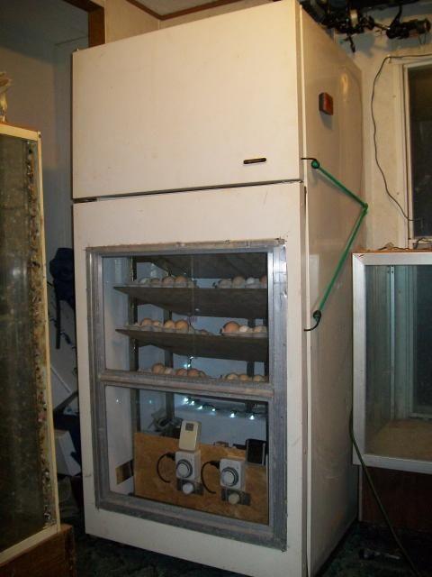 homemade cabinet incubator 007.JPG | Chickens | Pinterest ...