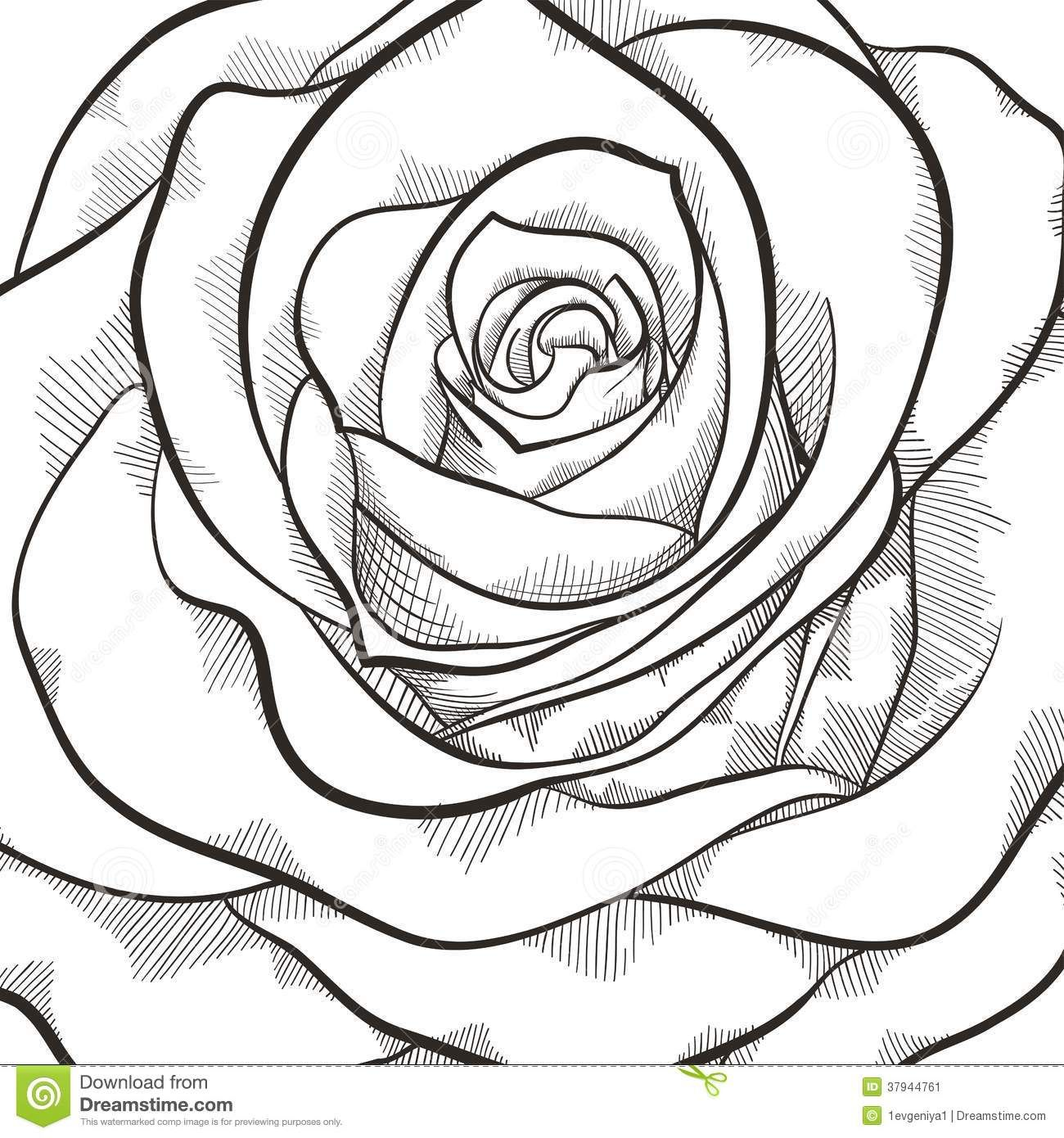 Background With Beautiful Black And White Rose Rose Flower Pictures White Rose Flower White Roses