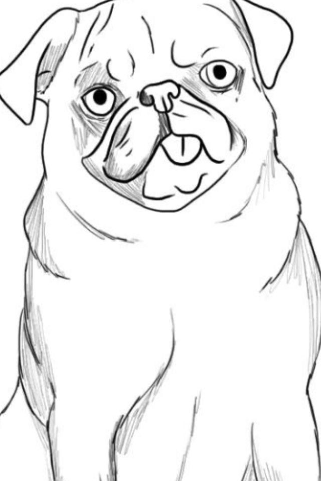 Easy To Draw Pug That I Drew With Images Cute Drawings