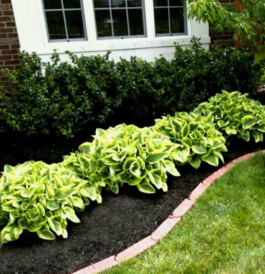 10 Cheap Flower Garden Project Ideas In 2020 Backyard Flowers