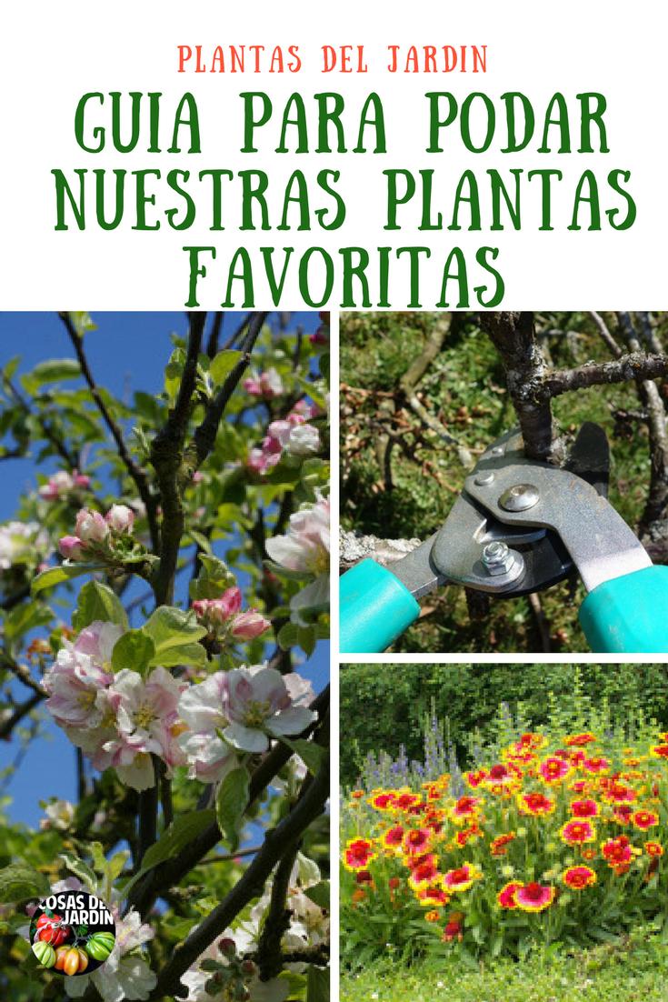 Gu a r pida y f cil para podar nuestras plantas favoritas - Poda de hortensias epoca ...