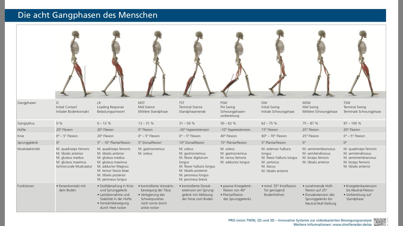Berühmt Hüfte Anatomie Und Physiologie Bilder - Physiologie Von ...
