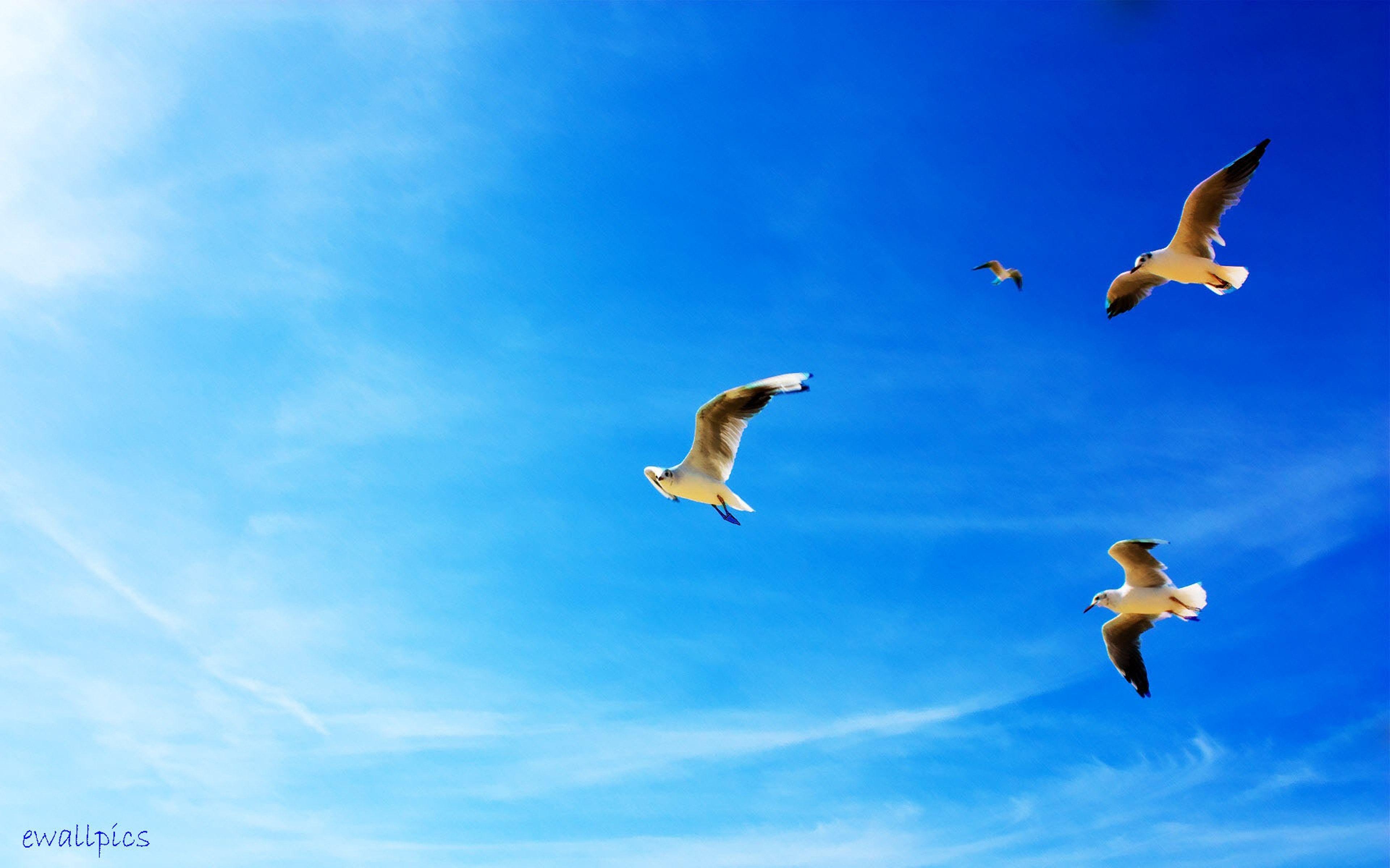 Birds In The Blue Sky 3840x2400 Blue Sky Via Www Allwallpaper In Birds Wallpaper Hd Bird Wallpaper Animals