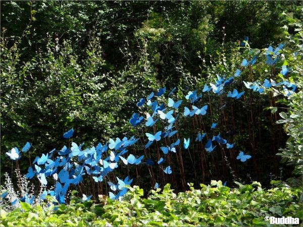 Vol de papillons bleus chaumont sur loire 39 le jardin - Jardin chaumont sur loire ...