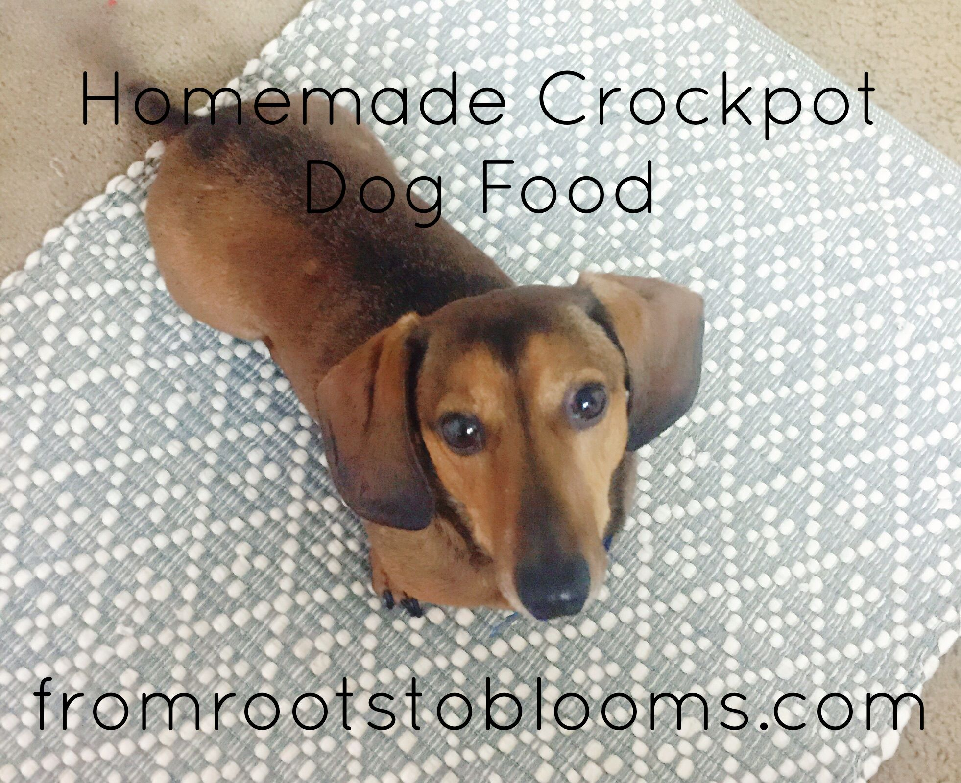 Homemade Crockpot Dog Food Dogfood Homemade Crockpot Dog Food