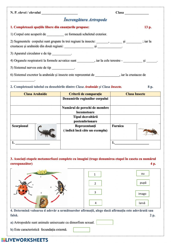 Artropode Interactive worksheet in 2020 Workbook