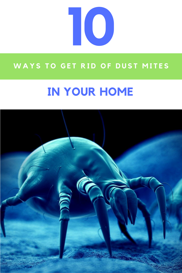 10 Ways To Get Rid Of Dust Mites Without Using Harmful