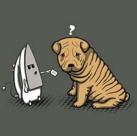 Sharpei Perros Graciosos Perros Sharpei Dibujos De Perros