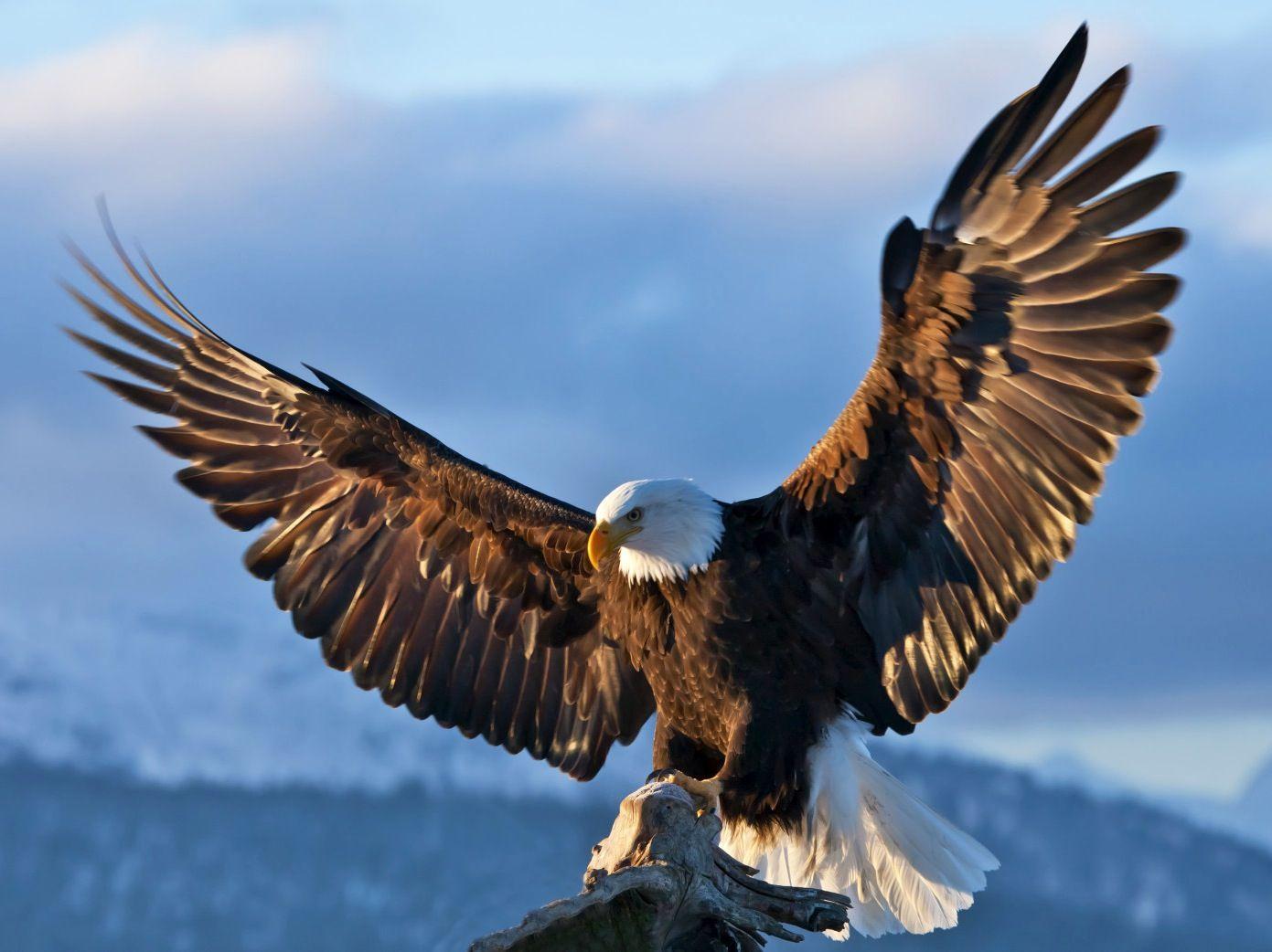 Aguila   Caballos   Pinterest   Animales, Pájaro y Las águilas