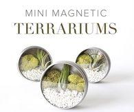 DIY Mini Magnent Terrarioum