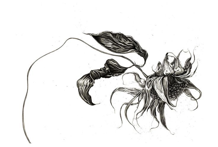 Sunflower Line Drawing : Image result for dying sunflower tattoos beauty and the beast