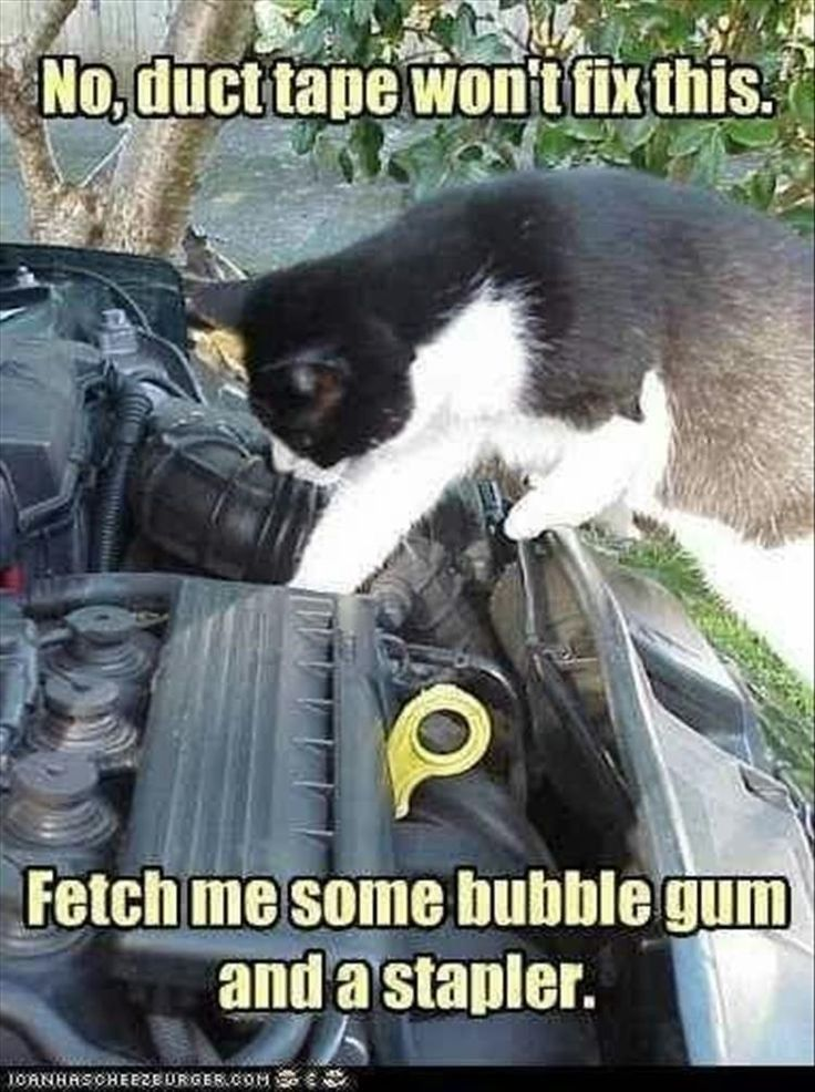 Bubblegum and a stapler Cute funny animals, Funny
