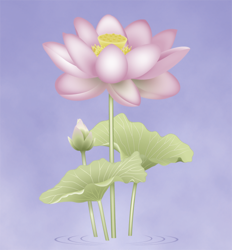 The Lotus, one of the Eight Sacred Symbols in Buddhism